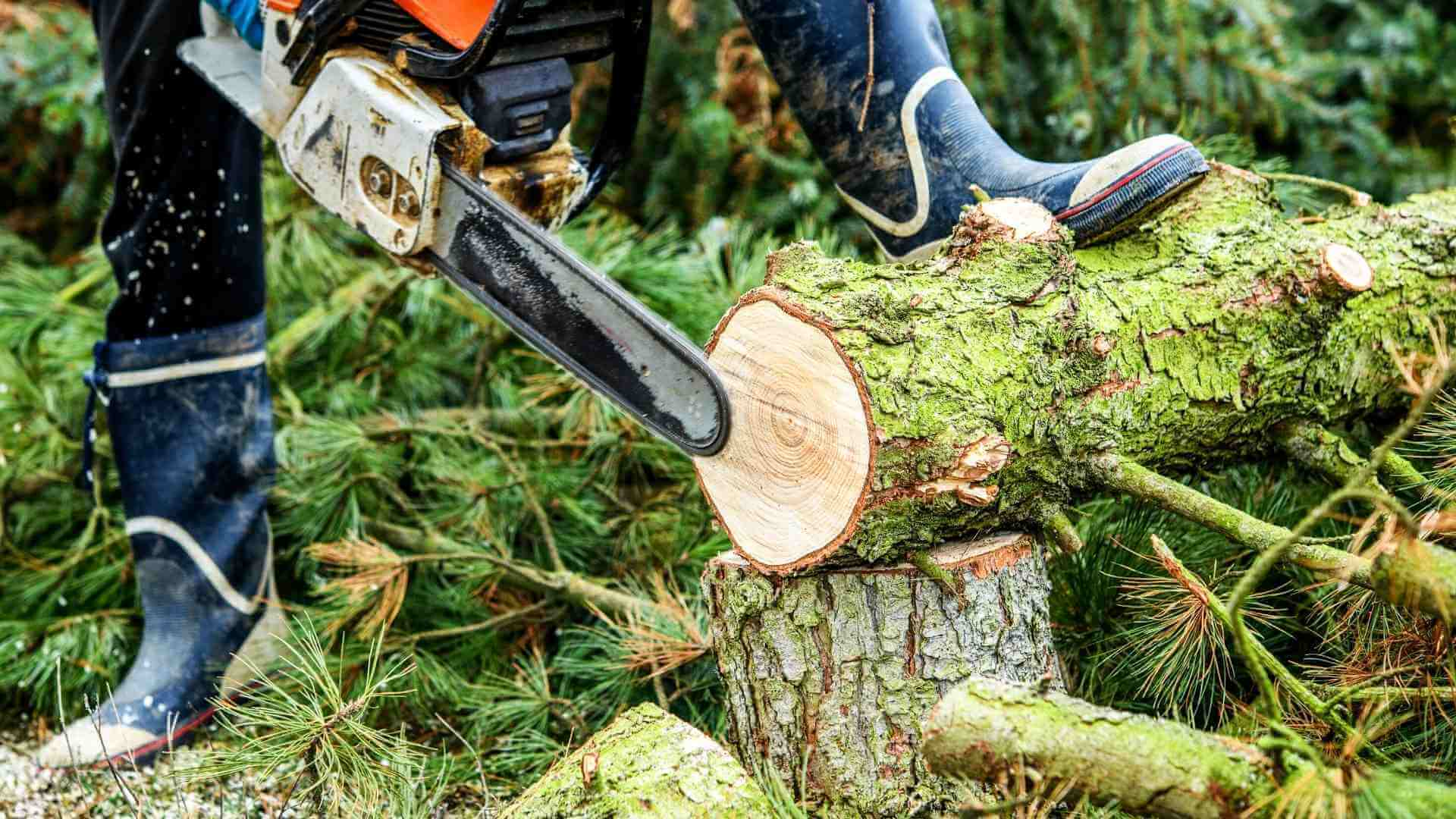 Bäume fällen auf dem Baugrundstück