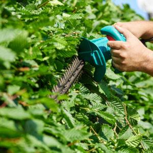 Gartenpflege: Achtung beim Griff zur Heckenschere