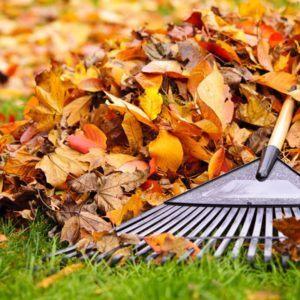 Rechte & Pflichten im Herbst