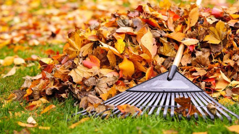Rechte und Pflichten im Herbst