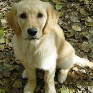 Streitpunkt Hundehaltung…
